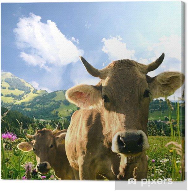 Kühe Canvas Print - Mammals