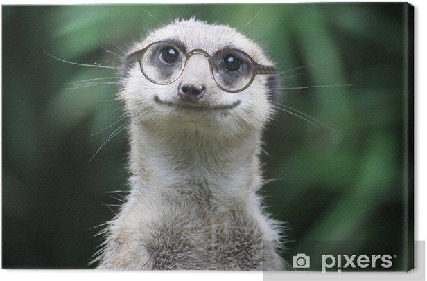 lächelndes Erdmännchen mit Brille Canvas Print - iStaging