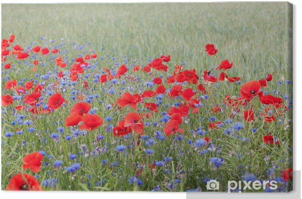 Landscape with poppies and cornflowers. Canvas Print - Cornflowers