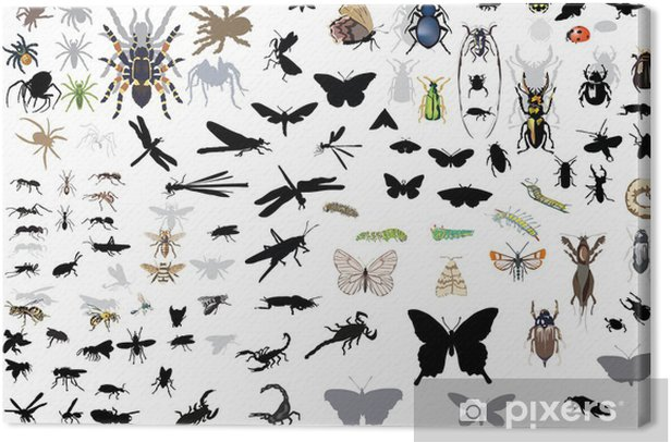 large set of isolated insects and spiders Canvas Print - Other Other