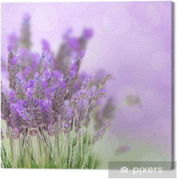 Lavender flowers field Canvas Print - Herbs
