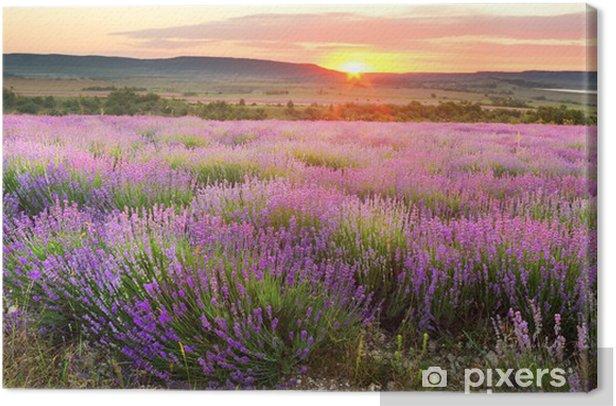 Lavender meadows Canvas Print - Themes