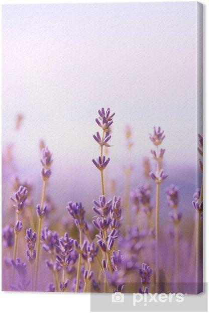 Lavender Canvas Print - Herbs