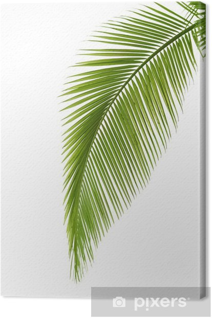 Leaf of palm tree Canvas Print - Trees and leaves