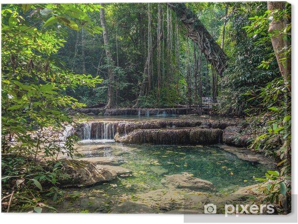 Lianas in the rainforest. Erawan National Park in Thailand Canvas Print - Themes
