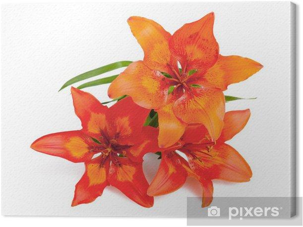 Lilium martagon Canvas Print - Flowers