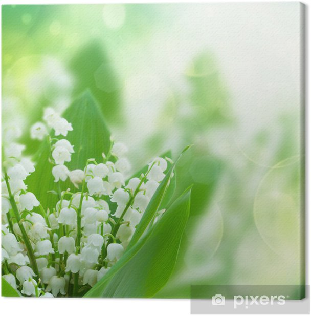 lilly of the valley flowers close up Canvas Print - Happiness