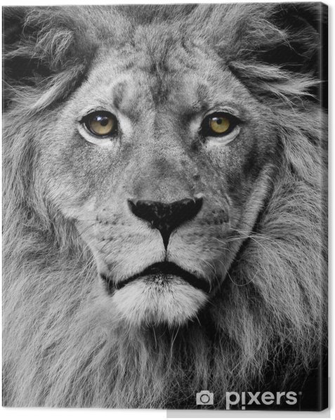 Lion eyes Canvas Print -
