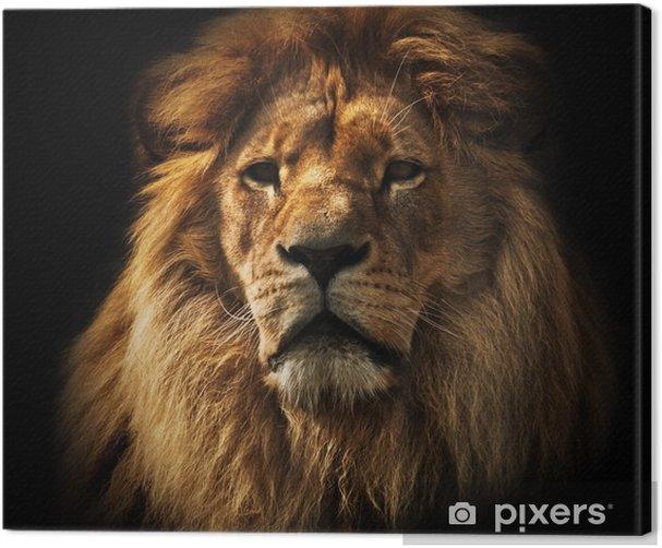Lion portrait with rich mane on black Canvas Print -