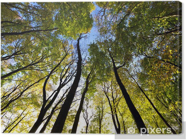 Looking up to the sky in the forest Canvas Print - Forest