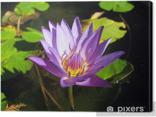 lotus bleu Canvas Print - Agriculture