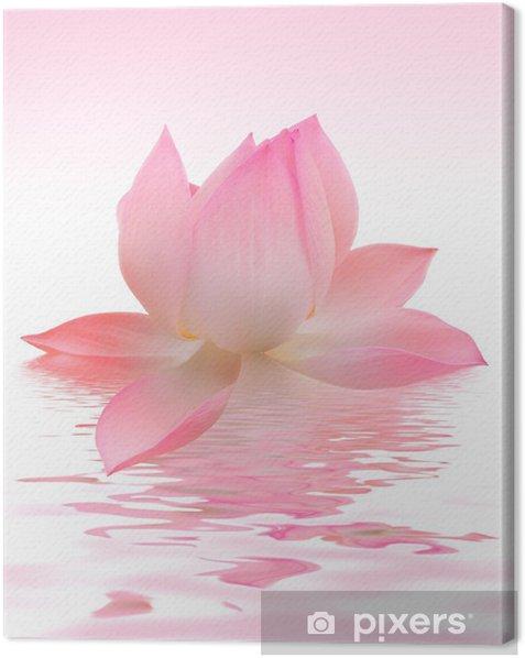 Lotus Canvas Print - Flowers