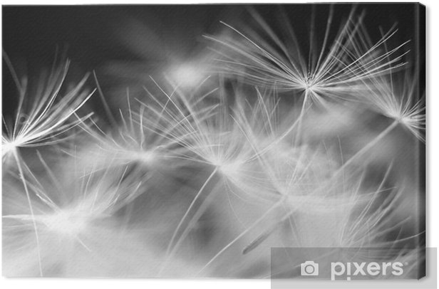 Macro beauty dandelion Canvas Print - Themes