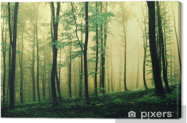 Magic green colored forest Canvas Print - Seasons