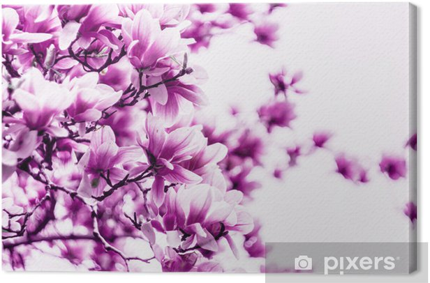 Magnolia flower blossom Canvas Print - Themes