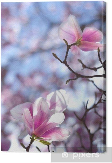 Magnolia Tree Tulip Like Flowers Of Shines Through In The Sun