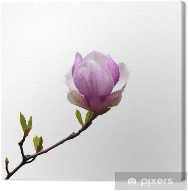 Magnolia Canvas Print - Wall decals