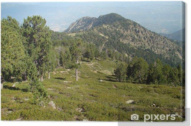 Massif du Canigou,Pyrénées orientales Canvas Print - Mountains