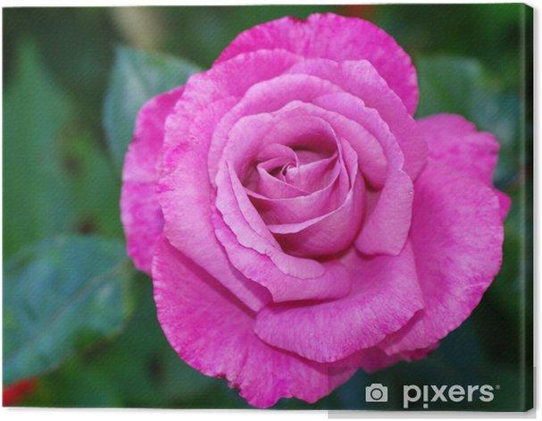 mauve rose. Canvas Print - Happiness