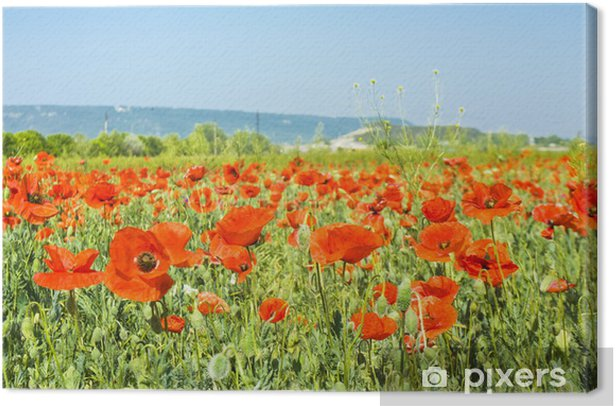 Meadow with red poppies Canvas Print - Themes