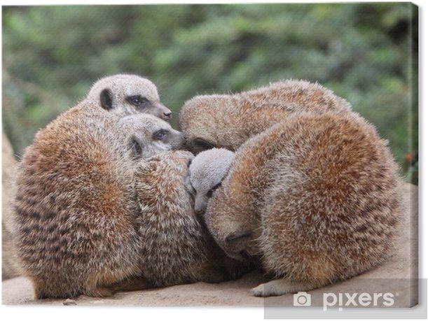 meerkats, Canvas Print - Mammals