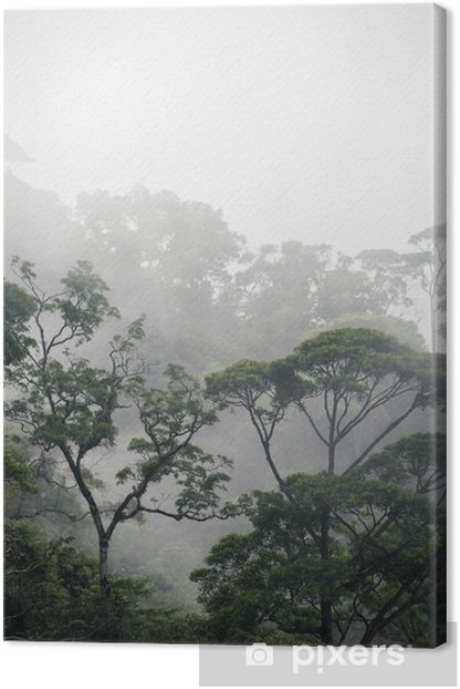 misty jungle forest Canvas Print - Landscapes