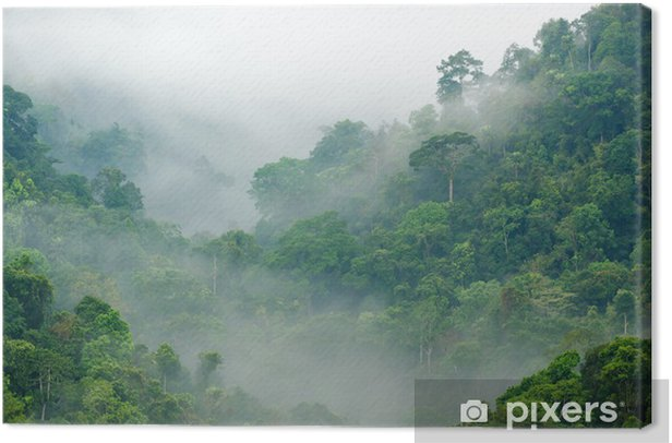 Morning fog in the rainforest Canvas Print - Themes