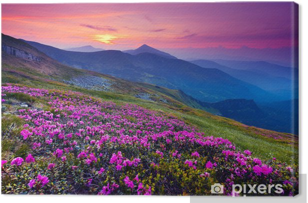 Mountain landscape Canvas Print - Meadows, fields and grasses