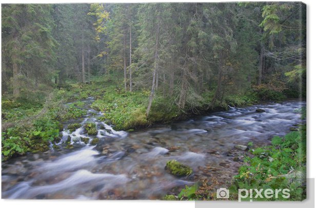 Mountain Streams In The Forest Canvas Print - Water