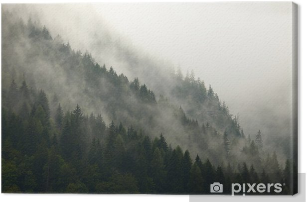 Mountain trees in the mist Canvas Print - iStaging