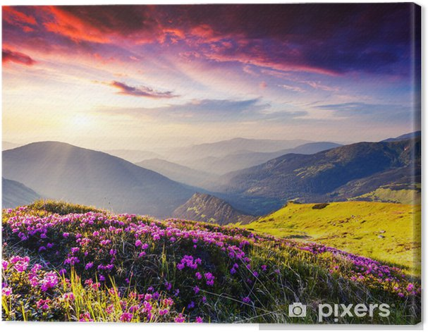Mountains behind a pink meadow Canvas Print - Themes