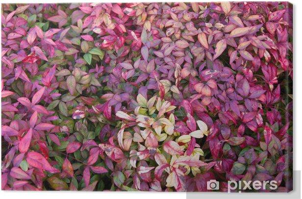 nandina foliage Canvas Print - Plants