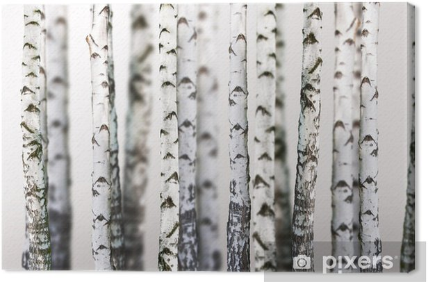 natural background - birch - wallpaper Canvas Print - Styles