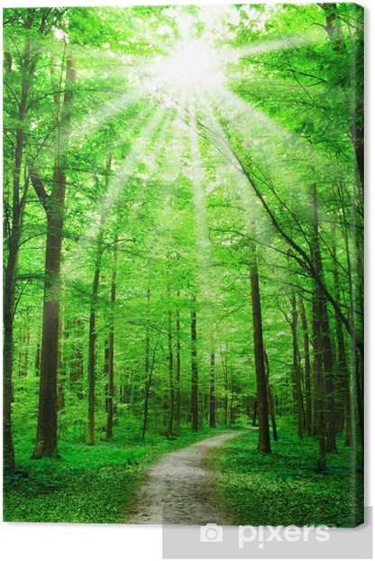 nature. path in forest with sunshine Canvas Print - Themes