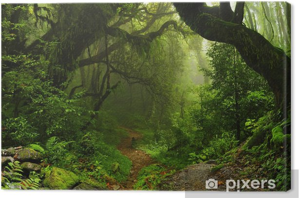 Nepalese jungle forest Canvas Print - Brazil