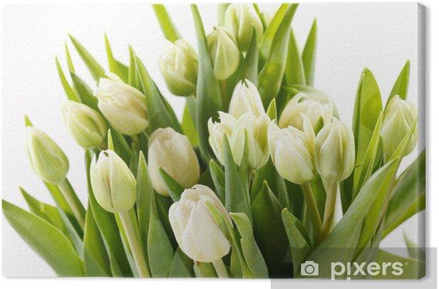 nice tulips Canvas Print - Themes