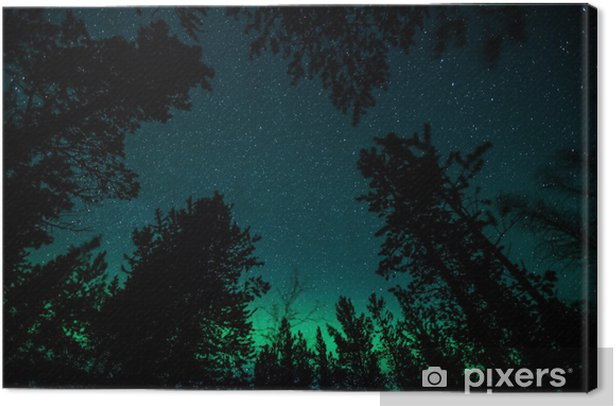 Northern lights above trees in Norway Canvas Print - Themes
