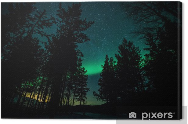 Northern lights above trees in Sweden Canvas Print - Themes