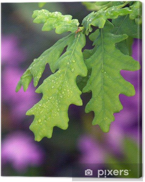 CANVAS Oak Leaves Changing Color Art print POSTER