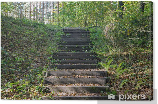 Old wooden staircase in the forest Canvas Print - Private Buildings