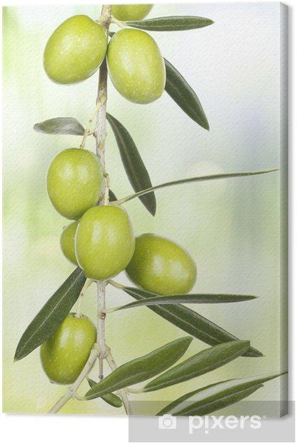olive branch Canvas Print - Olives