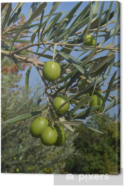 olive Canvas Print - Sales