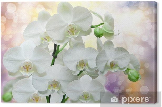 orchid flower Canvas Print - Flowers