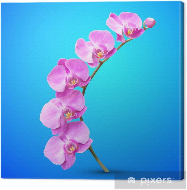 Orchid vector flower illustration. Tropical exotic flower Canvas Print - Themes