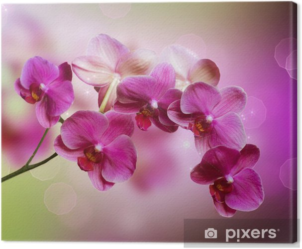 Orchid Canvas Print -