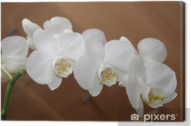 orchidea Canvas Print - Flowers
