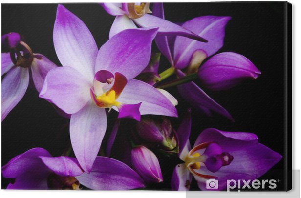 orchids Canvas Print - Styles