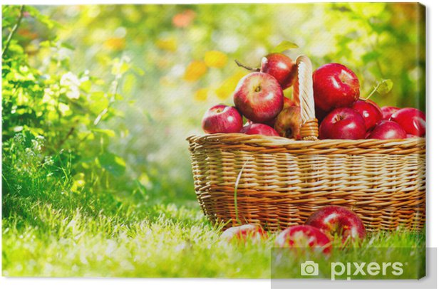 Organic Apples in a Basket Outdoor Canvas Print - Home and Garden