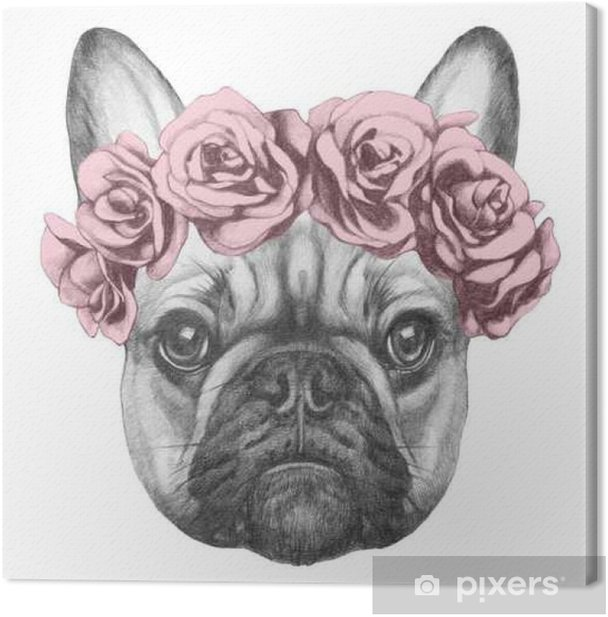 Original drawing of French Bulldog with roses. Isolated on white background Canvas Print - Animals
