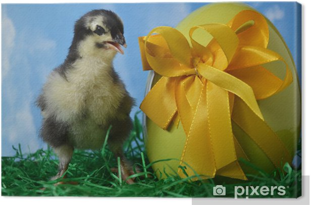 Osterküken (Hühnerrasse Marans) Canvas Print - International Celebrations